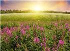 风景的花草微信图片