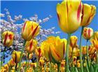 最漂亮的花草风景图片