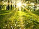 透过树枝的晨光草地图片