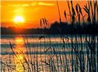 河边芦苇夕阳唯美图片