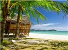 清新海边椰树下阴凉图片