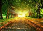 两排大树下面的休闲泊油路浪漫图片