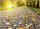 公园石砖路面掉落的梧桐树树叶秋天图片