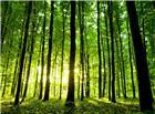 充满绿色的阳光树林图片
