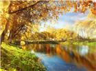 秋天河边树木变黄图片