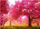 茂盛的红色树林唯美图片