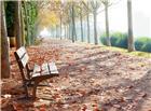落满梧桐树叶的公园小路还有长椅
