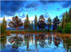 树林中的湿地美景图片