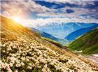高山上开满了白色鲜花图片