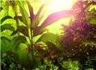 茂密的热带植物阳光图片