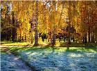 寒冷的冬天落满寒霜的小草
