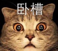 猫咪瞪大眼睛吃惊:卧槽