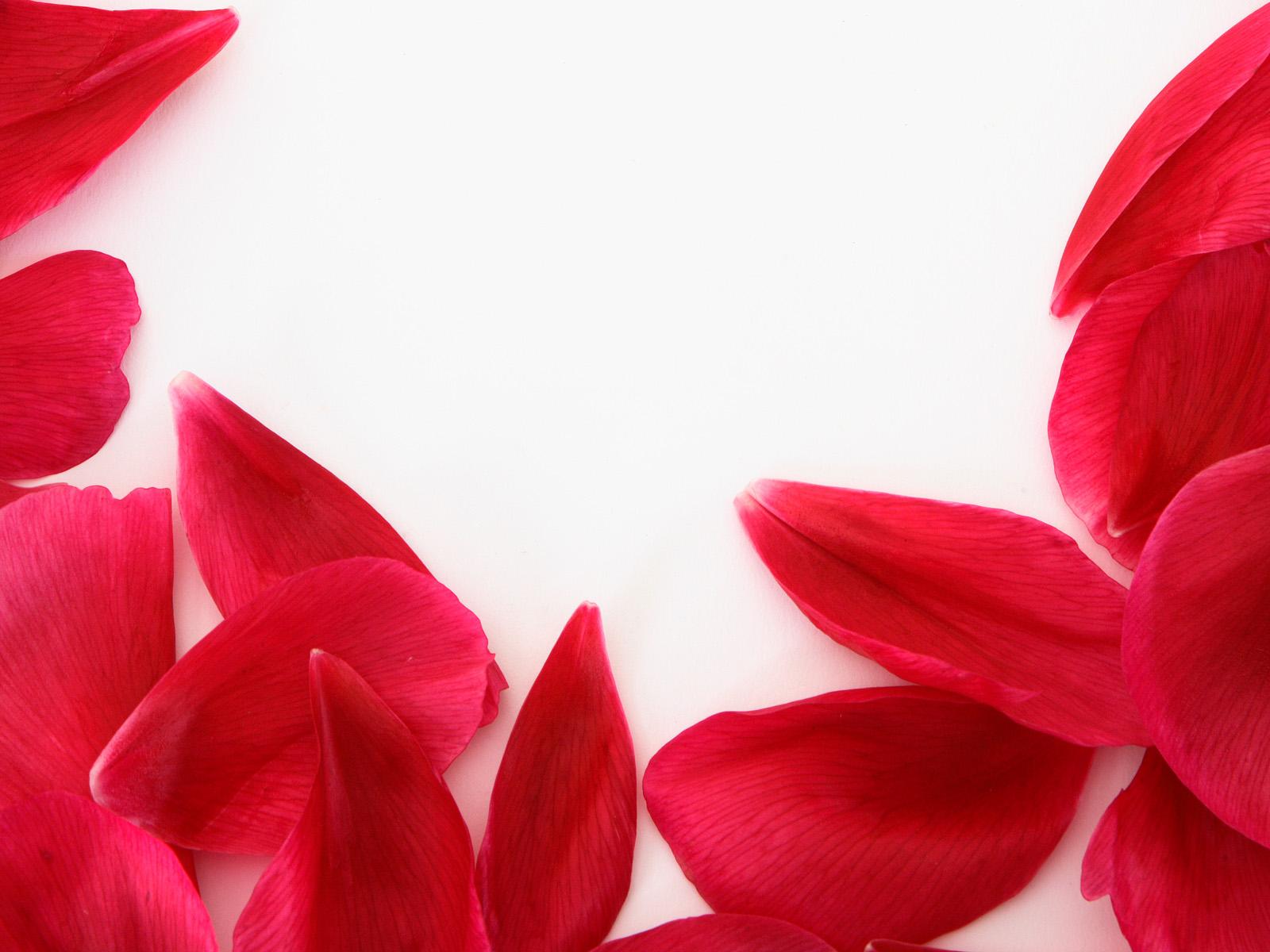 散落一片花瓣简笔画 花瓣图片(点击浏览下一张趣图)