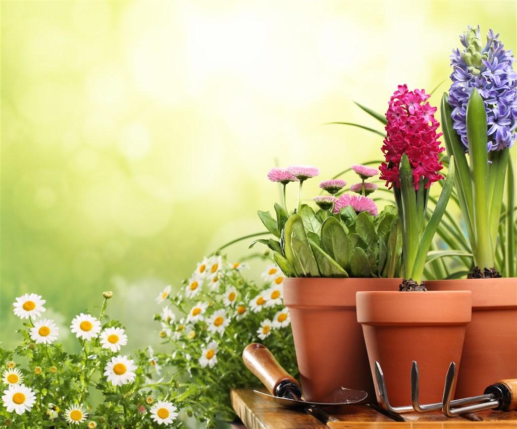 盆景花朵唯美素材图片(点击浏览下一张趣图)