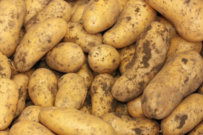 刚挖出的土豆高清图片(点击浏览下一张趣图)
