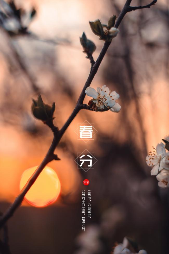 春天春分美化含苞开放图片(点击浏览下一张趣图)