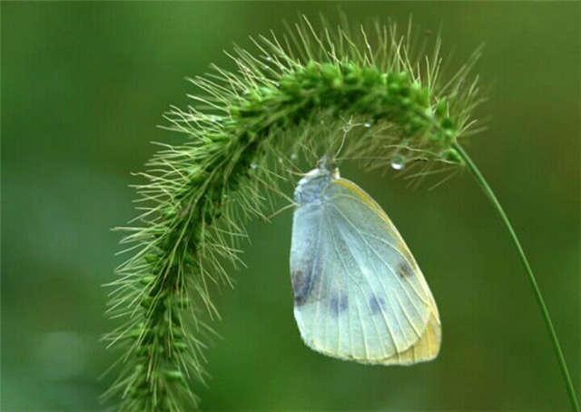 蝴蝶落脚高清细节图片(点击浏览下一张趣图)