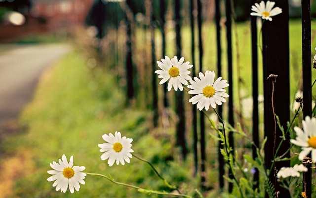 白色菊花微距背景唯美图片(点击浏览下一张趣图)