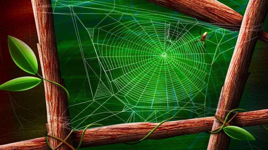 蜘蛛和蜘蛛网高清图片(点击浏览下一张趣图)